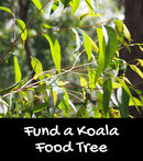 Fund a Koala Food Tree