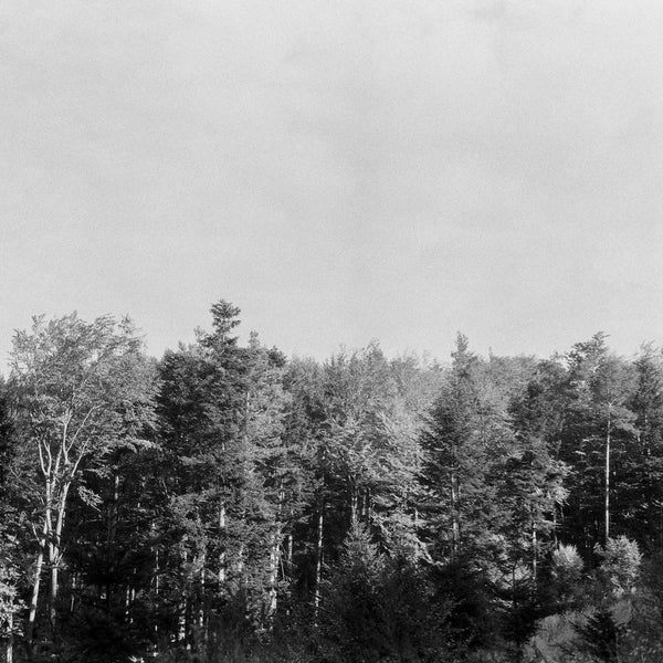 black and white photo of a forest and sky