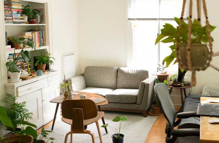 Living Room With Asthma Friendly Houseplants