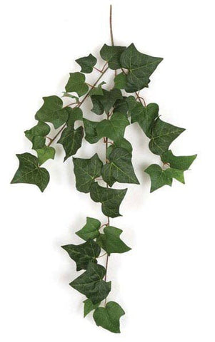 English Ivy Removing Benzene, Formaldehyde, Xylene, And Toluene From The Air