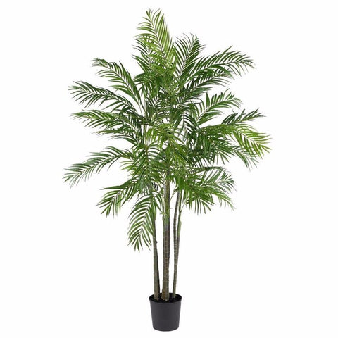 Bamboo Palm Adding Moisture Into Dry Indoor Atmospheres
