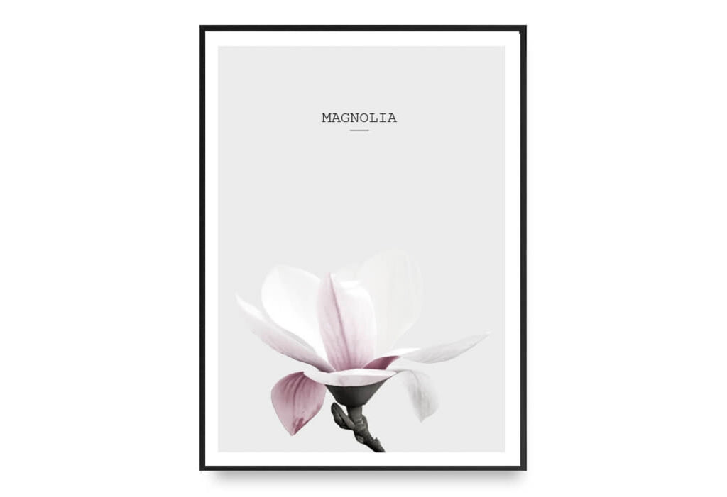 Magnolia In Pink No.2