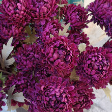 Load image into Gallery viewer, DAHLIA CLARET PKD 12 £2.70 EA.
