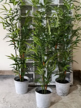 Load image into Gallery viewer, BAMBOO TREE PKD 4 £12.50 EA.