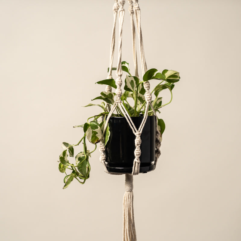 Macrame Double Plant Hanger - 56in
