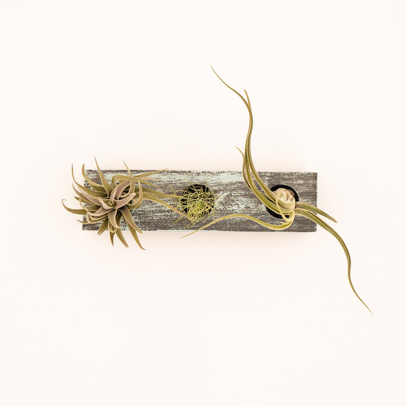 Handcrafted Wooden Air Plant Planter