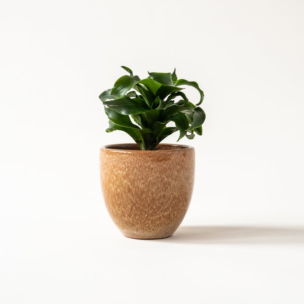 "Honey 5"" Classic Belle Pot"