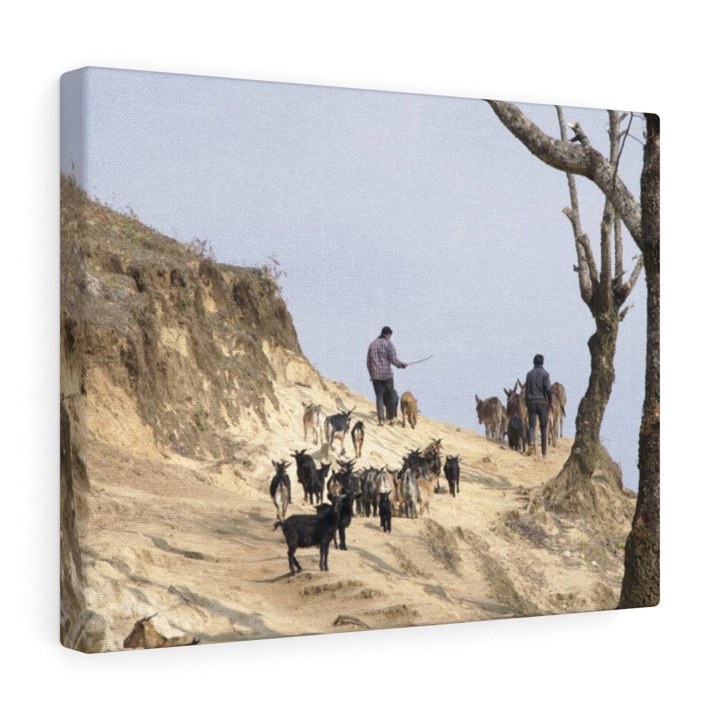 Goat Herding with the Yi - Canvas Print