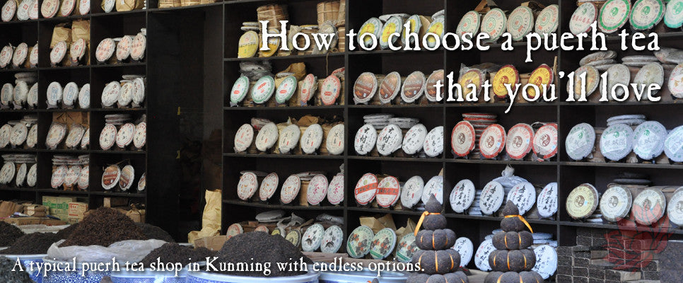 A guide to choosing a puerh tea that you'll love