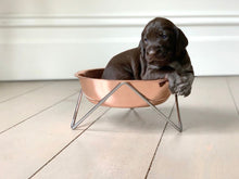 Load image into Gallery viewer, Elevated Dog Bowl - Bendo - Copper On Chrome-elevated dog bowl-Aus Pet Accessories