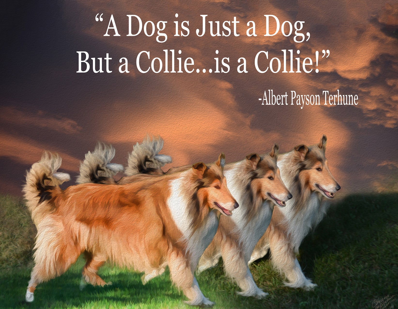 A Dog is a Dog, but a Collie is a Collie!  8 Note Cards