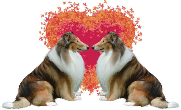Collie Love #1