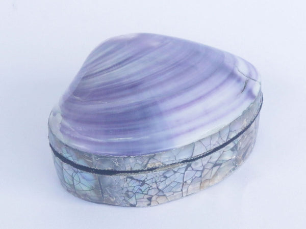 Shell Box Purple