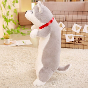 We have cute husky plushie of all size! Get one that suits your preference today!