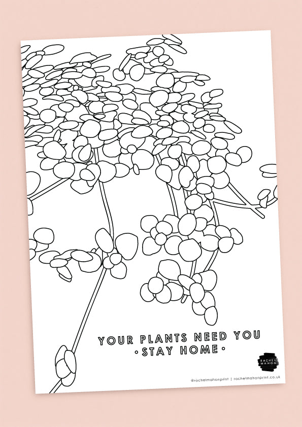 Pilea Glaucophylla Colouring In Sheet
