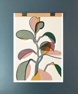 Baby Rubber Plant II A2 Art Print