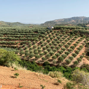 Agourolado High Phenolic Olive Oil from Crete - Olive Grove Market