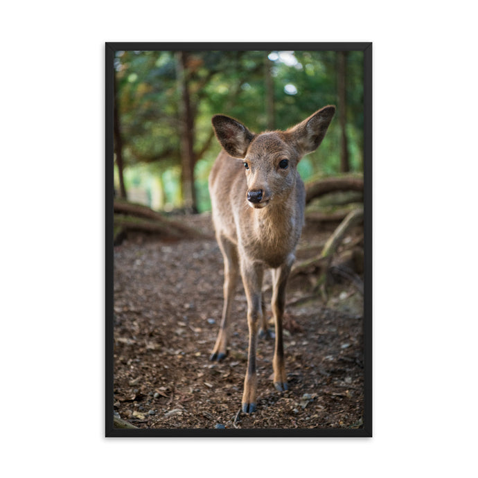 A Sika Deer in Nara, Kyoto - Framed Glossy Poster