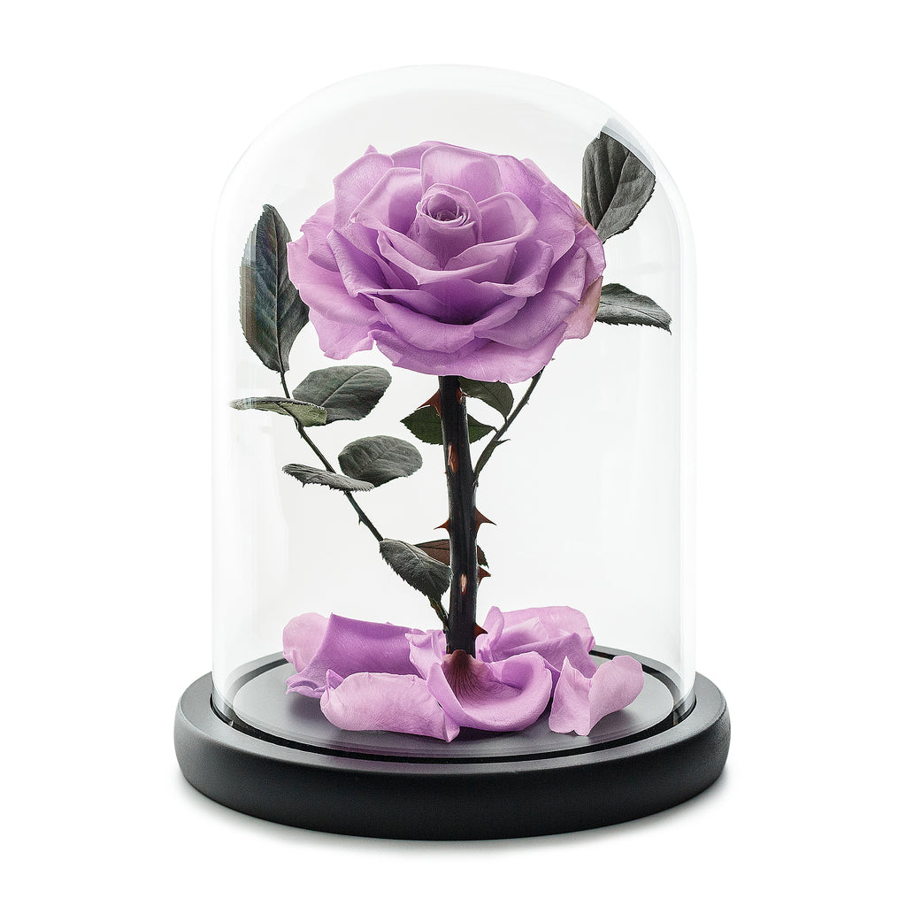 Purple Infinity Rose in Glass Dome -1