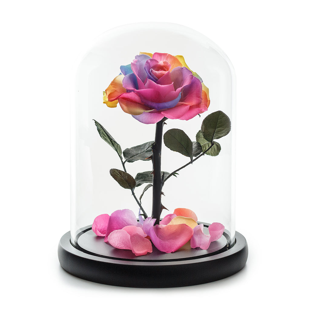 Rainbow Infinity Rose in Black Glass Dome -1