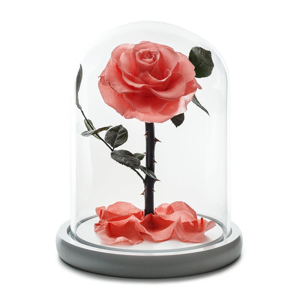 Peach Infinity Rose in Glass Dome -1