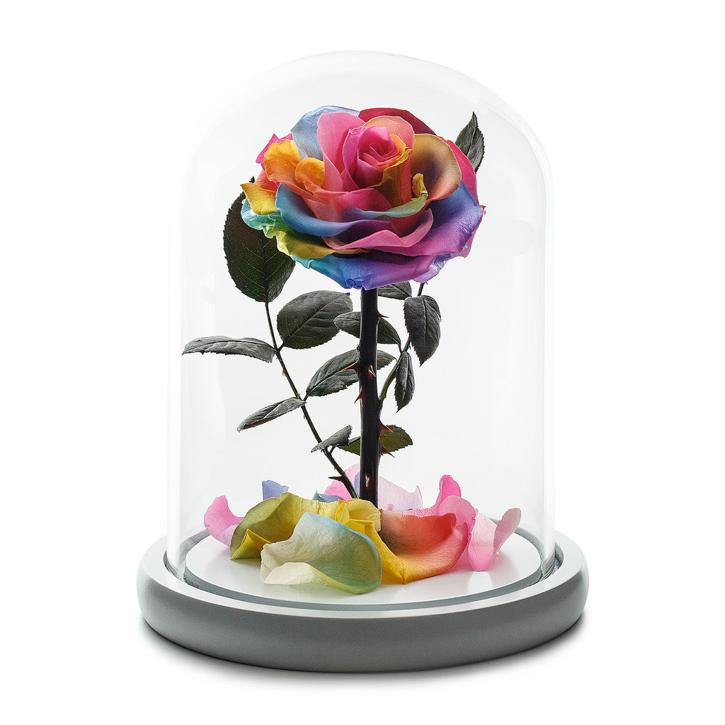 Rainbow Rose in White Glass Dome -1