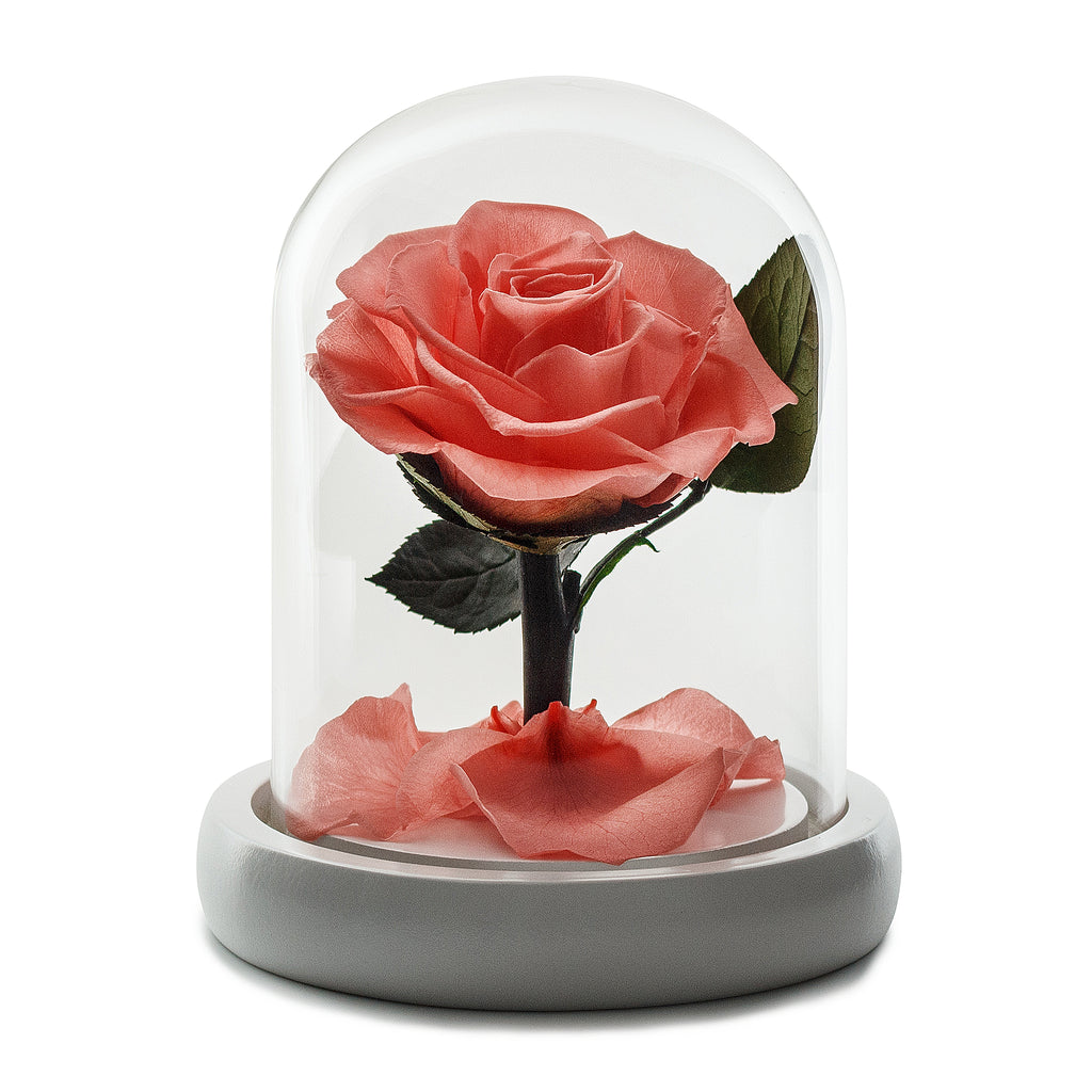 Peach Eternity Rose in Glass Dome -1