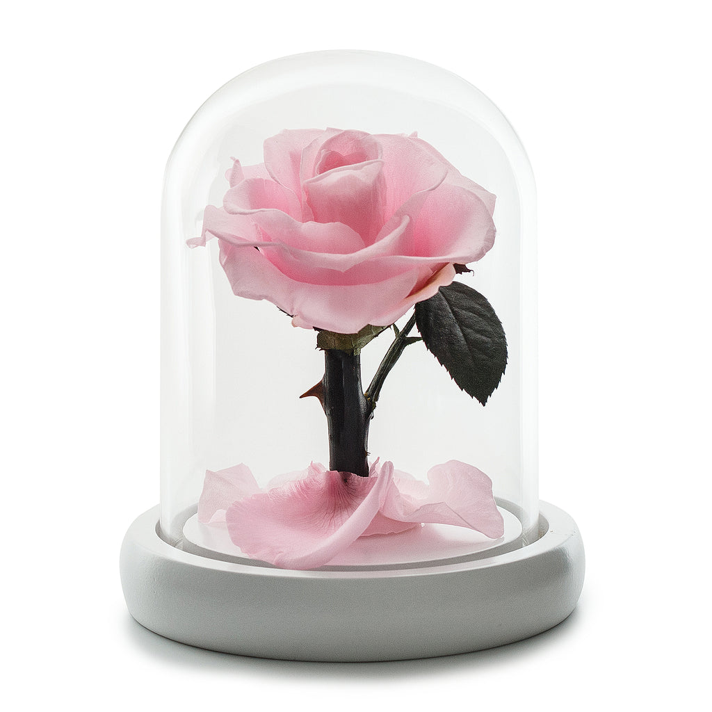 Eternity Light Pink Rose in Glass Dome -1