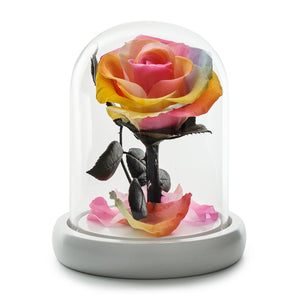 Rainbow Eternity Rose in Glass Dome -1