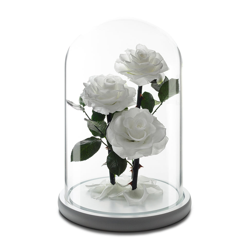 White Grand Roses in Glass Dome -1