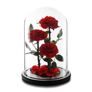 Infinity Red Grand Roses in Glass Dome -1