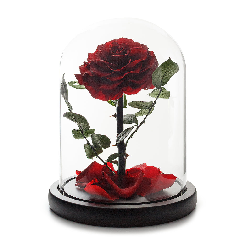 Enchanted Eternity Wine Red Rose in Glass Dome -1