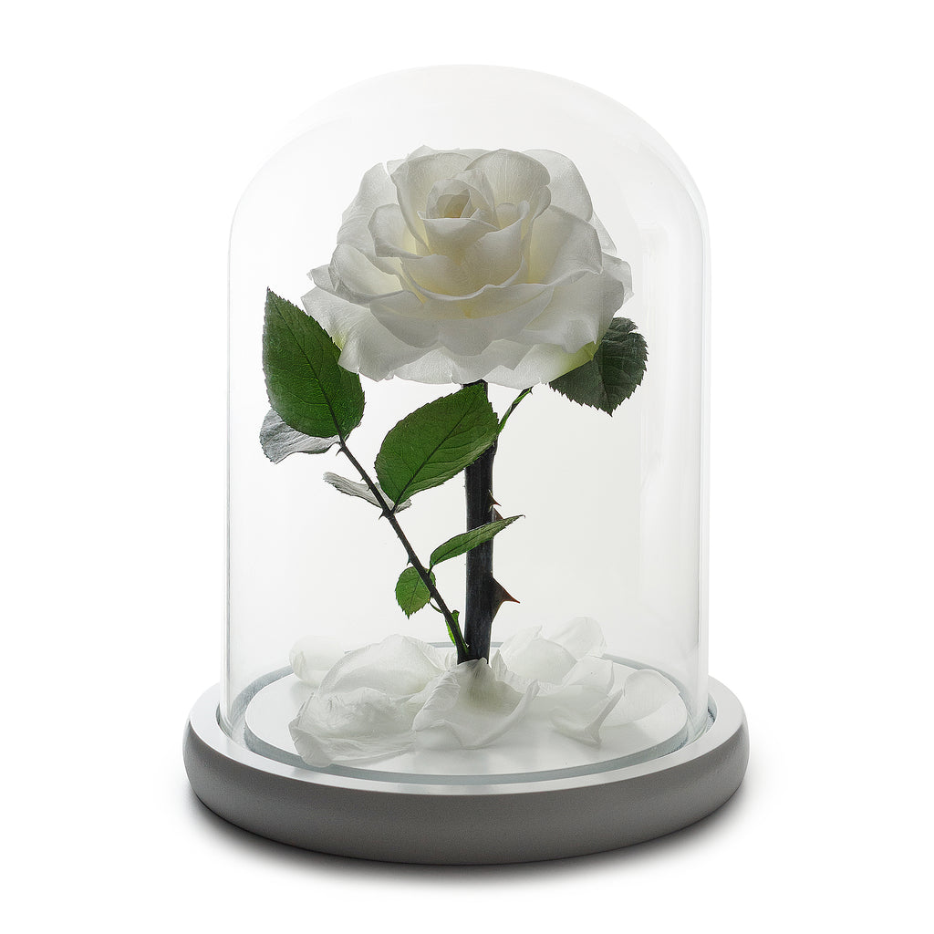Enchanted Eternity White Rose in Glass Dome