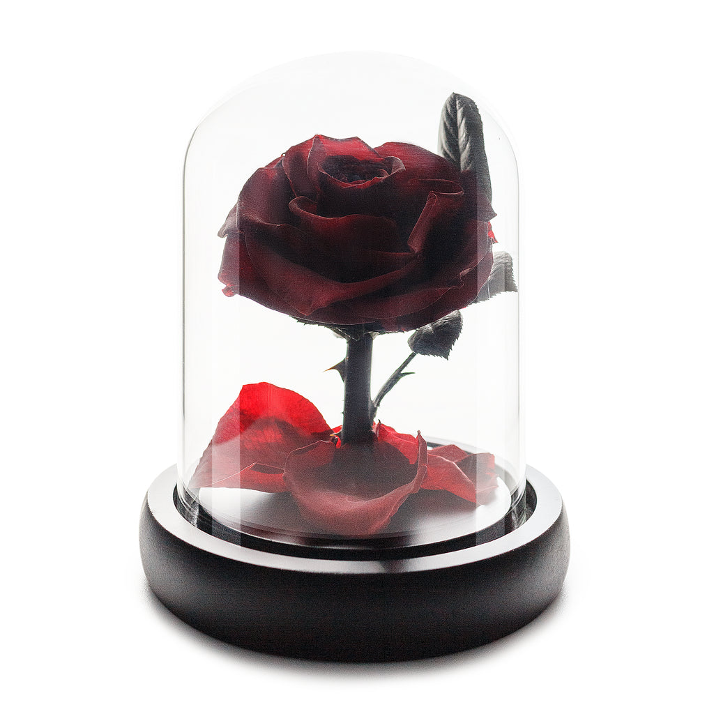 Wine Red Infinity Rose in Glass Dome -1
