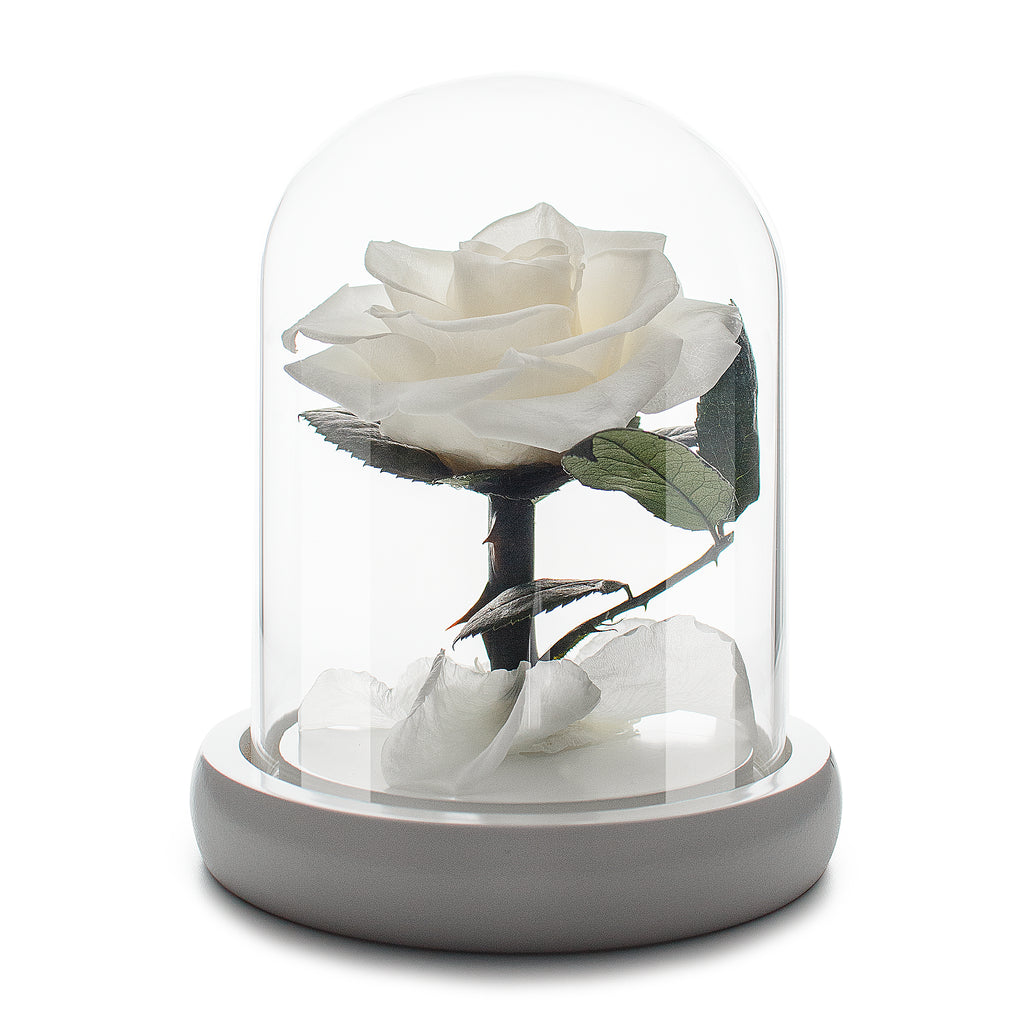 Infinity White Rose in Glass Dome
