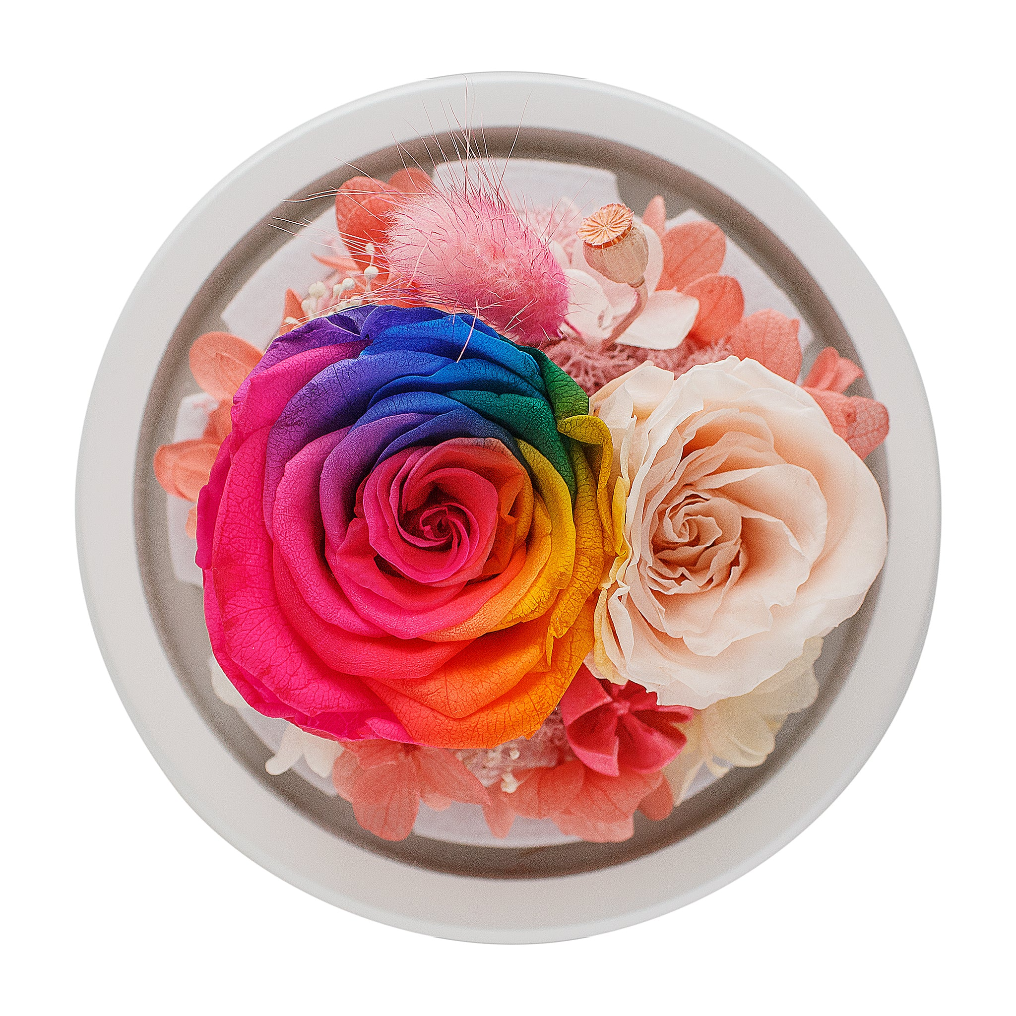 Rainbow Infinity Rose in White Glass Dome