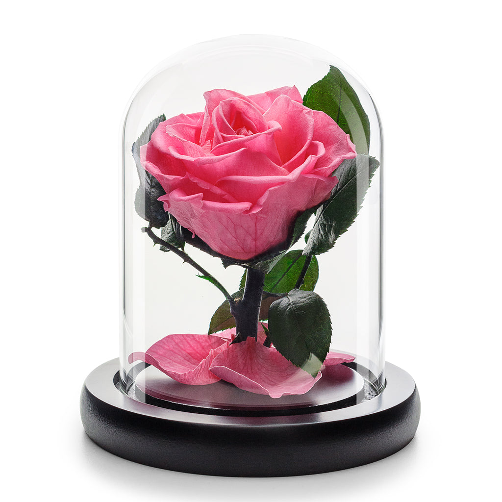 Infinity Pink Rose in Glass Dome -1