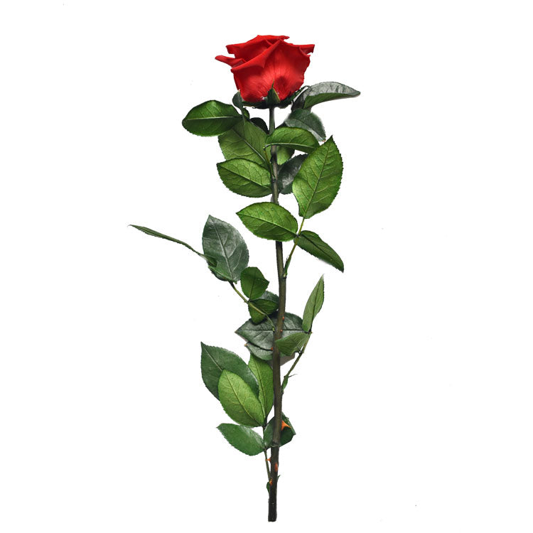 Everlasting Preserved Red Rose Stem -1