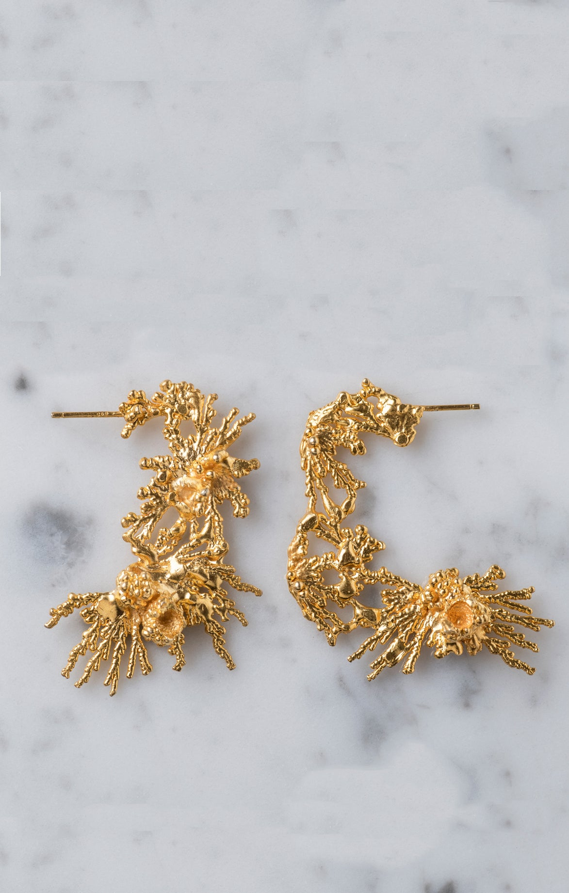 Acropora Middle Circle Earrings