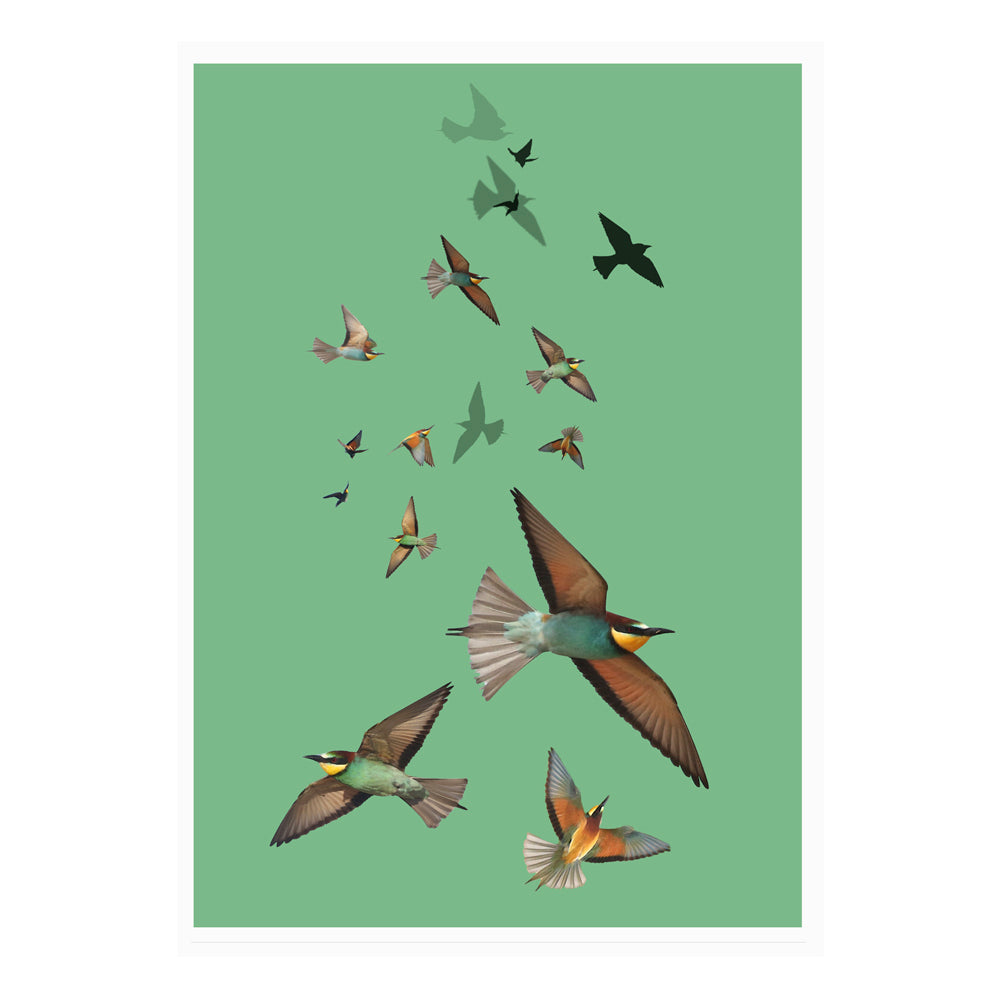Bee Eaters Watercolour Wall Art Poster By Hershgold