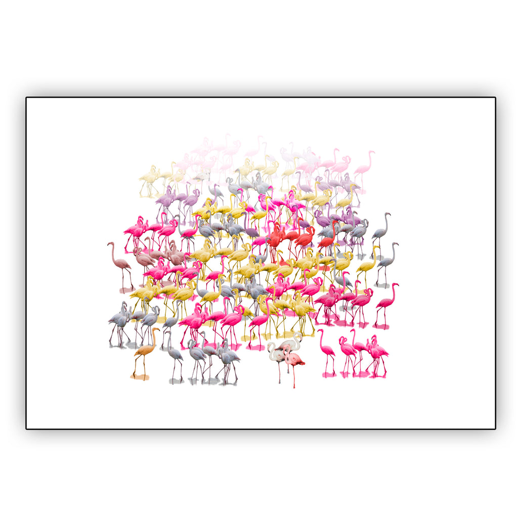 Hershgold Flamingo Family Wall Asrt Poster