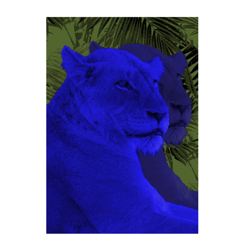 Lioness Wall Poster By Hershgold In Blue
