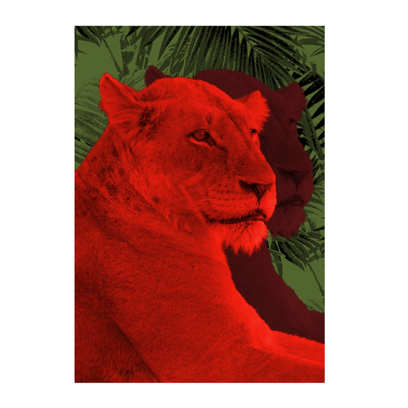 Lioness Wall Poster By Hershgold In The Red