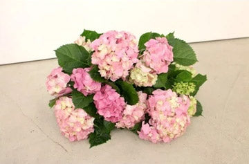 Best selling summer flowers in our store.
