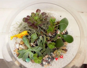 Our new range of Terrariums