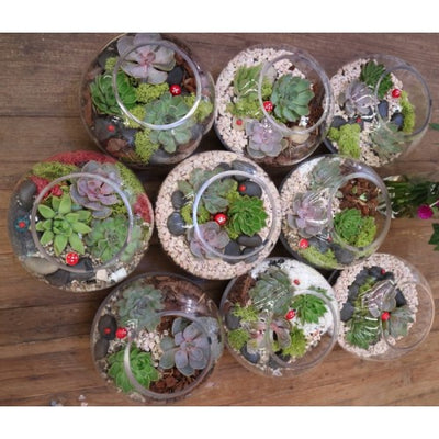 Succulent garden Terrarium workshops in January 2018