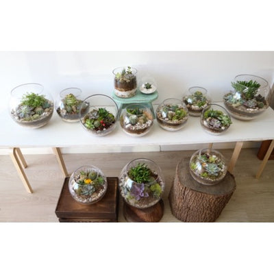 Our terrarium mini garden collection