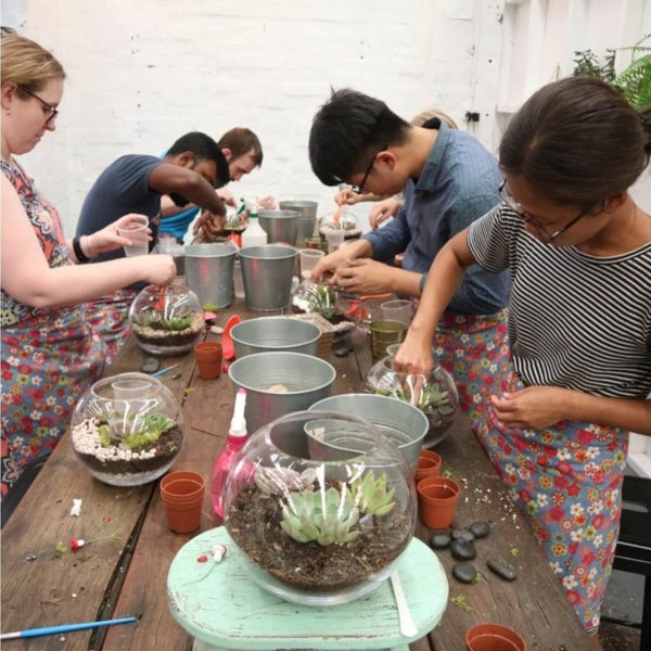 terrarium-workshop-indoor-garden-sydney-class-succulent