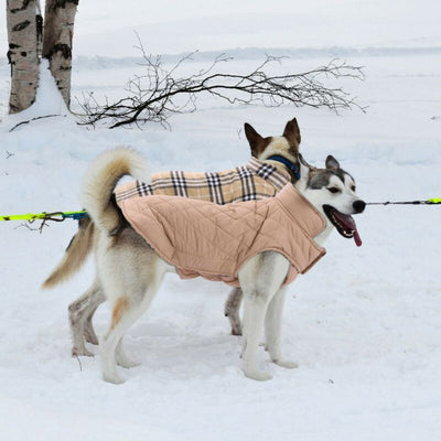 Dog Winter Waterproof Warm Padded Jacket For Medium / Large Dog
