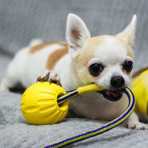 Dog Ball toothbrush